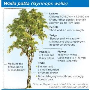 Walla-patta